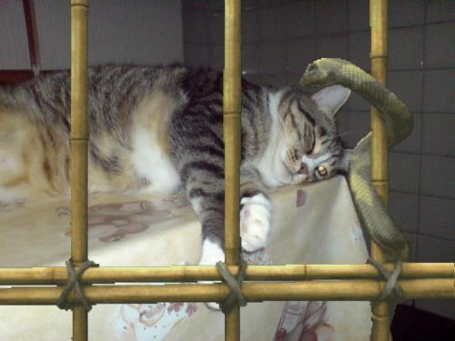 Sissi in gabbia