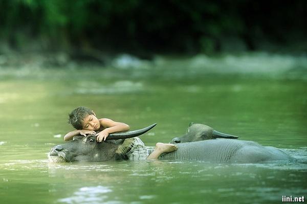 con sông quê và tuổi thơ