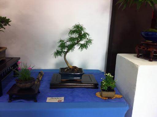 Exposición en Benalmadena IMG_0495