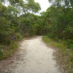 Sandy trail in the Awabakal Nature Reserve (391748)