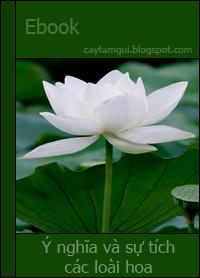Ebook tổng hợp Ý nghĩa và sự tích về 81 loài hoa