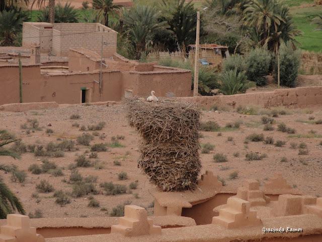 marrocos - Marrocos 2012 - O regresso! - Página 5 DSC05705