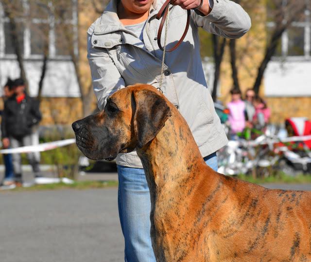 Кубок Аризоны-14(ПК)+ЧРКФ, Красноярск, 27 апреля 2014 DSC_5701