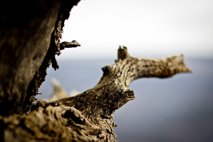 Twisted_Tree