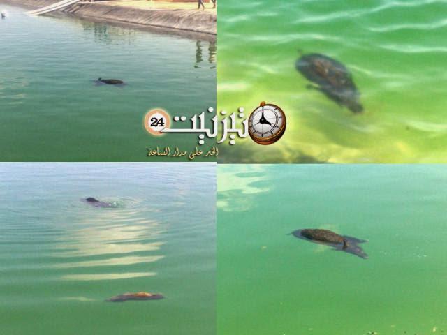 """""""الحلوف"""" ينتحر بشكل جماعي في منطقة الحاشيت بدوار أتبان بتيزنيت / مرفق بصور"""