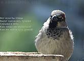Pondering Bird, хайбун, урус-хайбун, танка