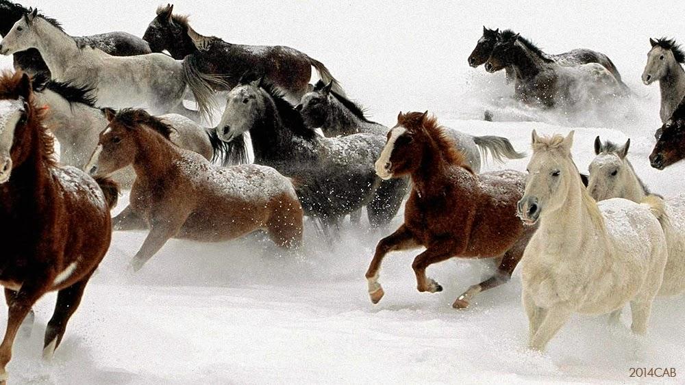 Testclod horde de chevaux sauvages dans la neige - Coloriage cheval sauvage ...