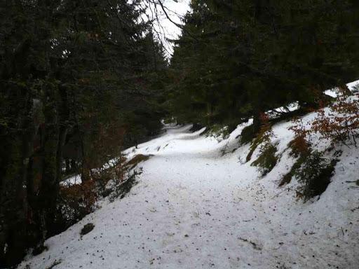 Dans la forêt entre Bockwasen et le petit Ballon