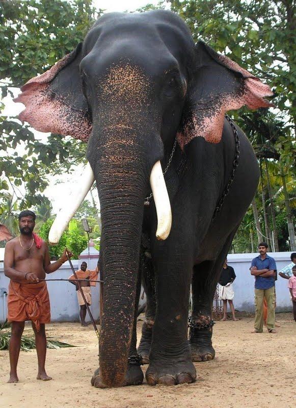 Thrikkadavoor Sivaraju Song Full Mp4 Hd Audio