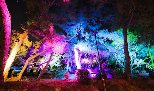 須磨浦公園 敦盛桜 花灯りで松林が鮮やかな虹色にライトアップ