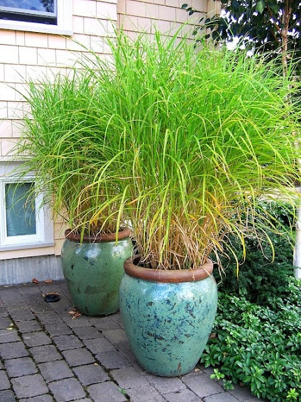 Nuovo spazio: piante verdi da terrazzo, balcone, vaso resistenti al ...