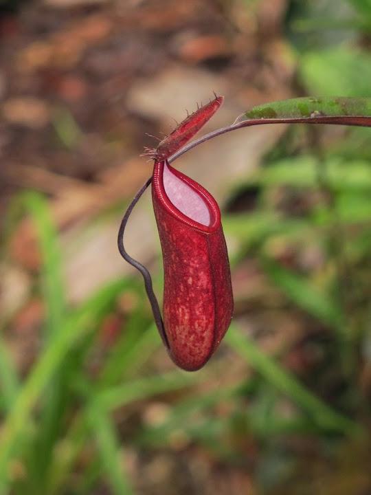 Borneo%25202014%2520extra%25201-04.jpg