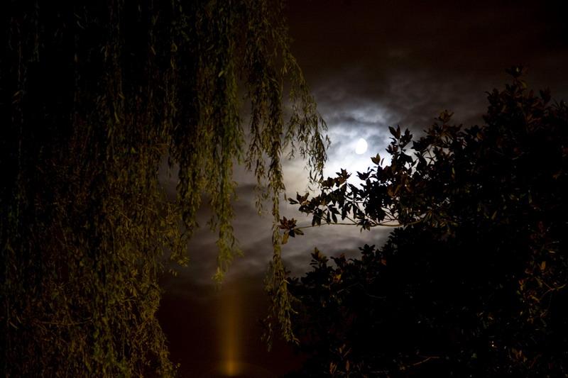 Ganador Floro - Titulo : Luna creciente