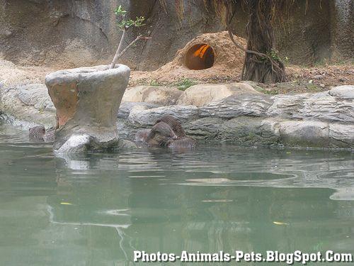 https://lh4.googleusercontent.com/-hzG-_cH7TVk/TXxmLT1aLJI/AAAAAAAAAG4/lV6VULH9o7k/s1600/Animal+pictures+_otter-1.jpg