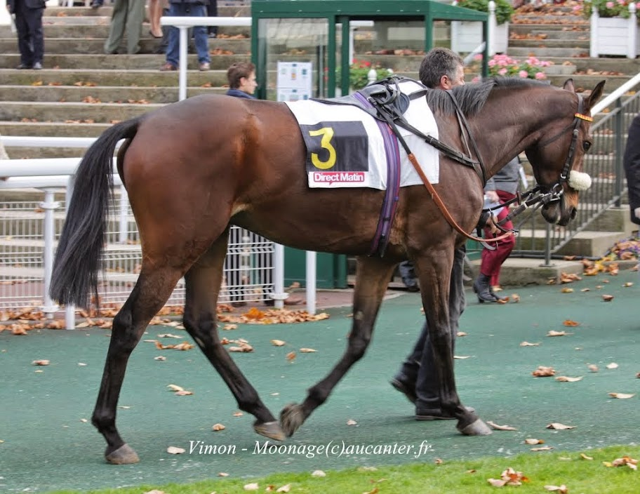 Photos Auteuil 2-11-2014 (48h de l'obstacle) IMG_5230