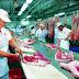 Đơn hàng chế biến thực phẩm lọc thịt lợn cần 3 nam làm việc tại Gunma Nhật Bản tháng 06/2017