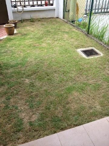 Selepas rumput dipotong dan lalang dicabut