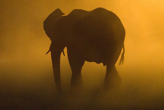 أفضل ما في أفريقيا  Best of Africa Namibia_090907111841