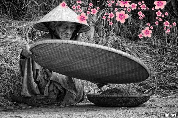 thơ nhớ mẹ già nơi quê nhà trong ngày xuân