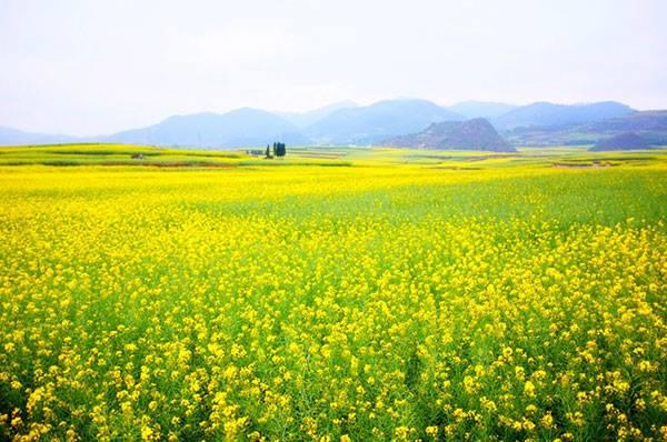 don hang trong hoa cuc can 3 nu lam viec tai aichi nhat ban thang 01 2018