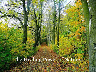 The Healing Powers of Nature in Healthcare Facilities