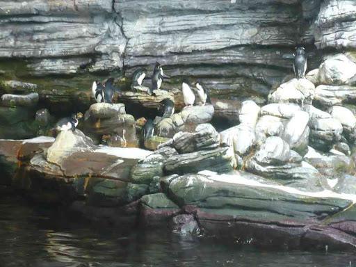 Et quelques pingouins