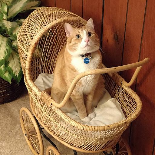 Janice Baxter