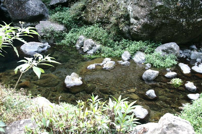 Orchidées in situ, sur l'ile de la Réunion IMG_2214