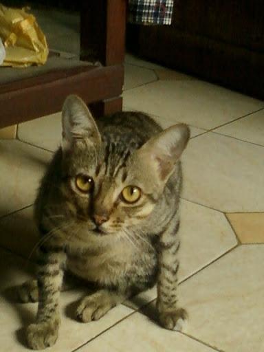 kucingku