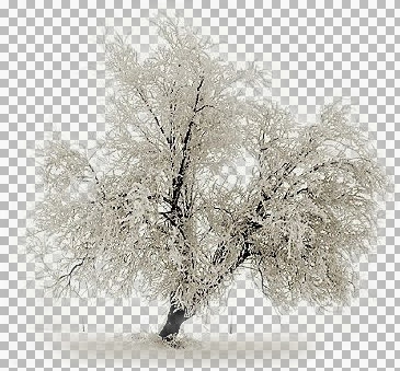 Winter_Tree_2_TT.jpg