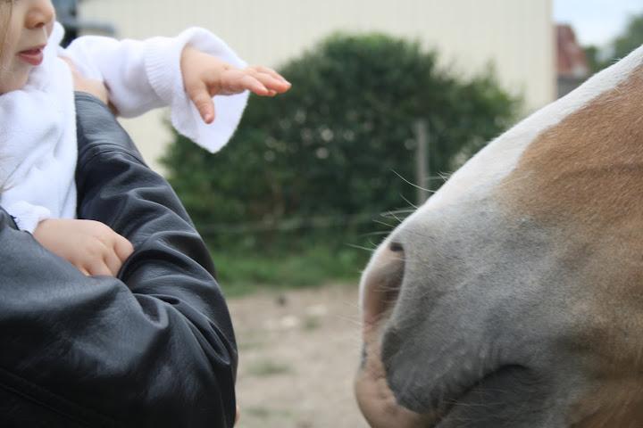 Concours Photo Juillet : Quand Cheval rime avec Poésie... IMG_4820