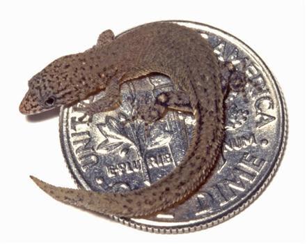 உலகின் மிகச் சிறிய விலங்குகள் : புகைப்படங்கள்        AP060611143045_170430