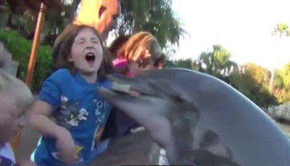 Dibaham ikan lumba-lumba