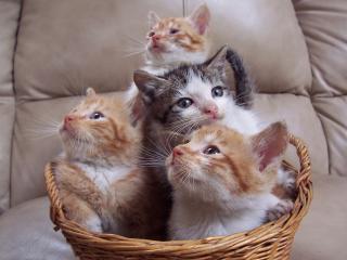 Magia do gato cuidados com o gato filhote - Cuidados gato 1 mes ...