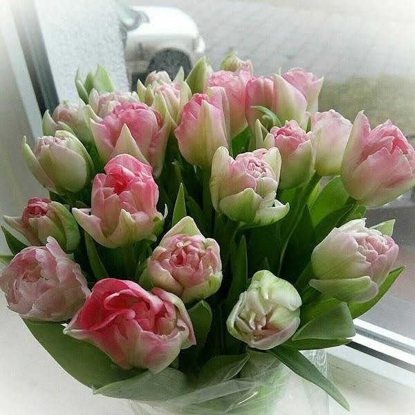Купить живые цветы с доставкой по Минску Беларуси на дом