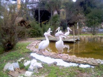 Пеликаны в зоопарке Лиссабона фото
