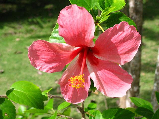 Из зимы в лето. Филиппины 2011 - Страница 3 IMG_0013