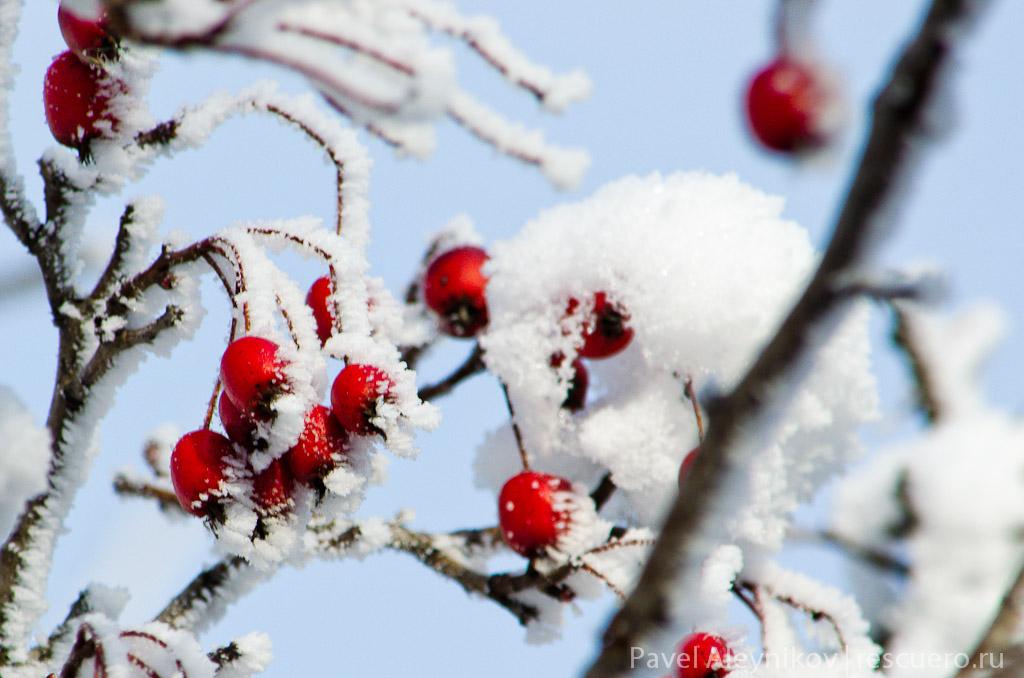 Птичье лакомство зимой
