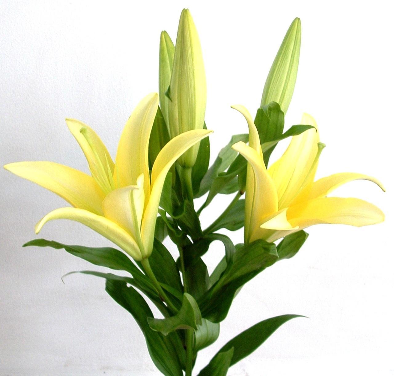 Ảnh có chứa cây, hoa, bó hoa, bình  Mô tả được tạo tự động