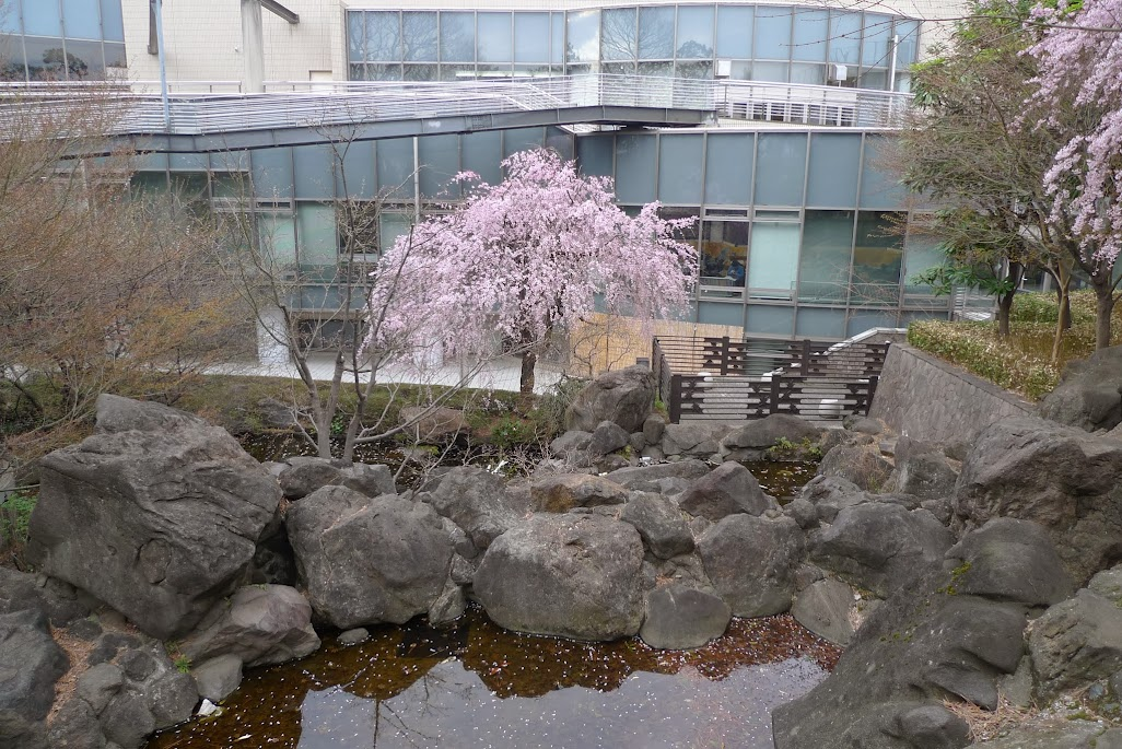sakura momijiyama nakano