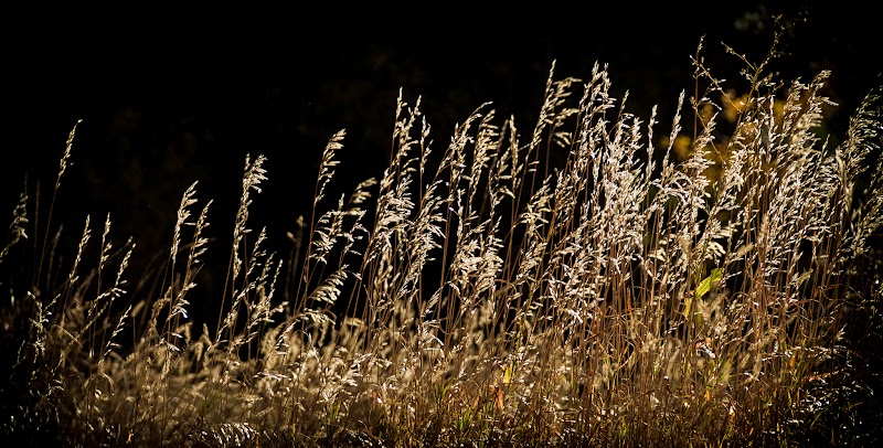 Grass lit by the sun