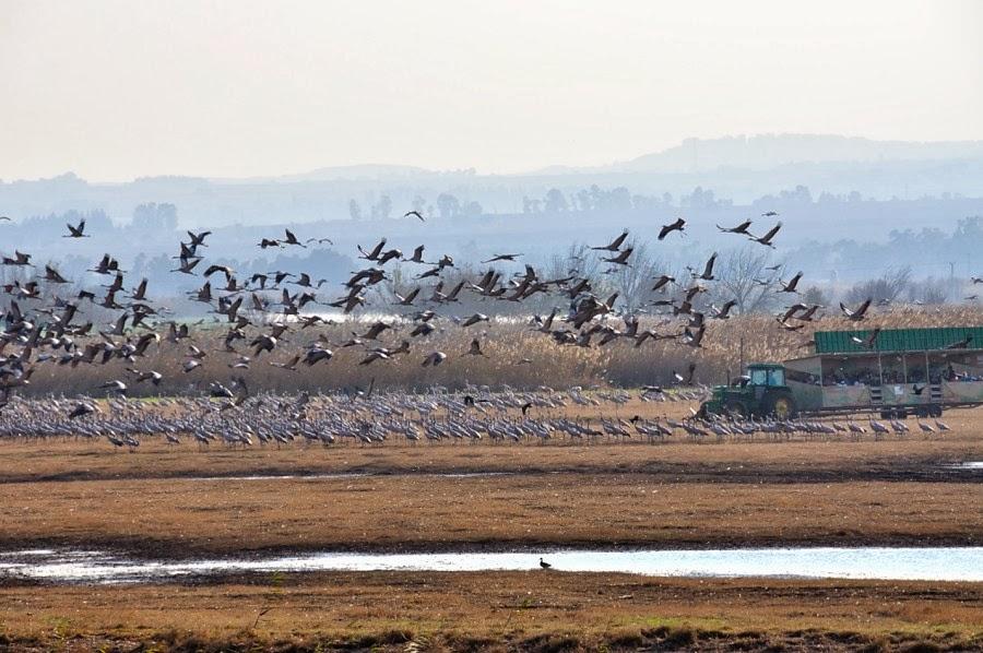 Заповедник Хула. Передвижной пункт наблюдения за птицами