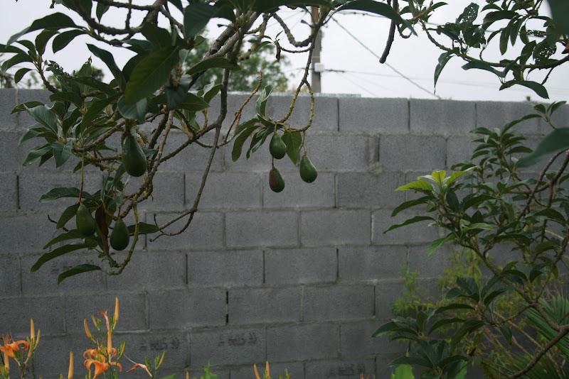 Futur jardin d'orchidées!!! IMG_3524