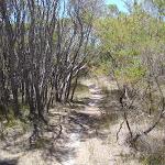 Track through the heath (106210)