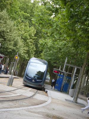 並木と路面電車