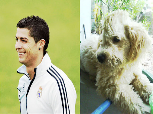 also dogs like his hairstyle ronaldo the best