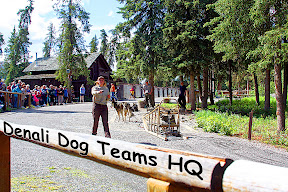 Click for our Denali Dog Teams HQ   travel pics