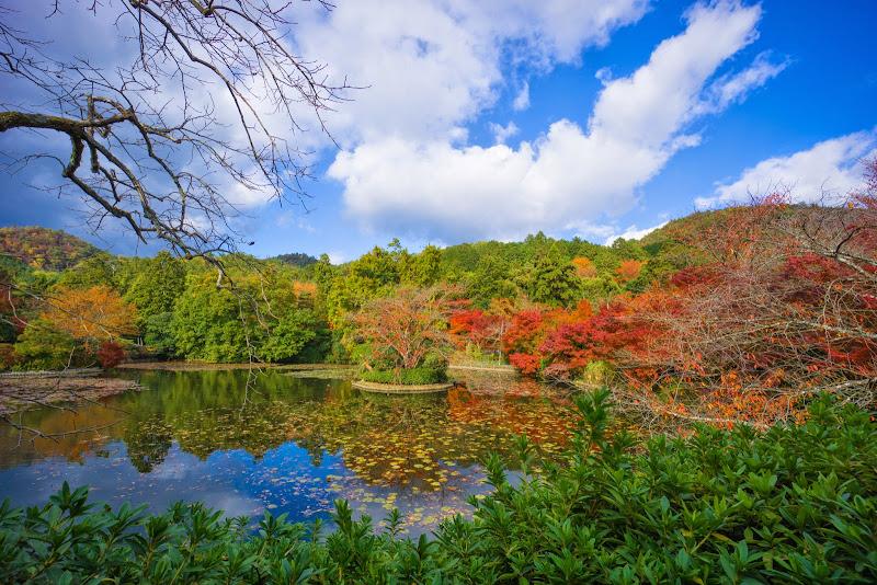 京都 紅葉 龍安寺 写真7