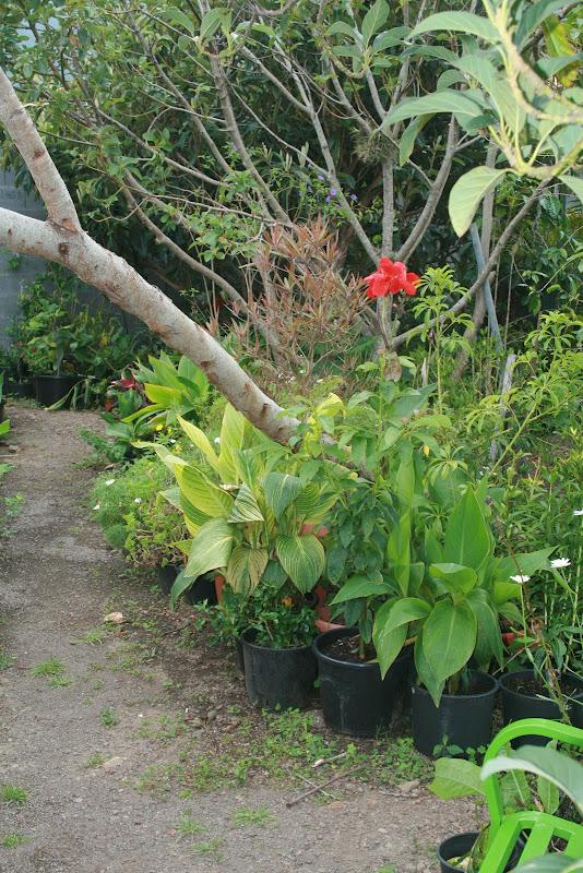 Futur jardin d'orchidées!!! IMG_3527