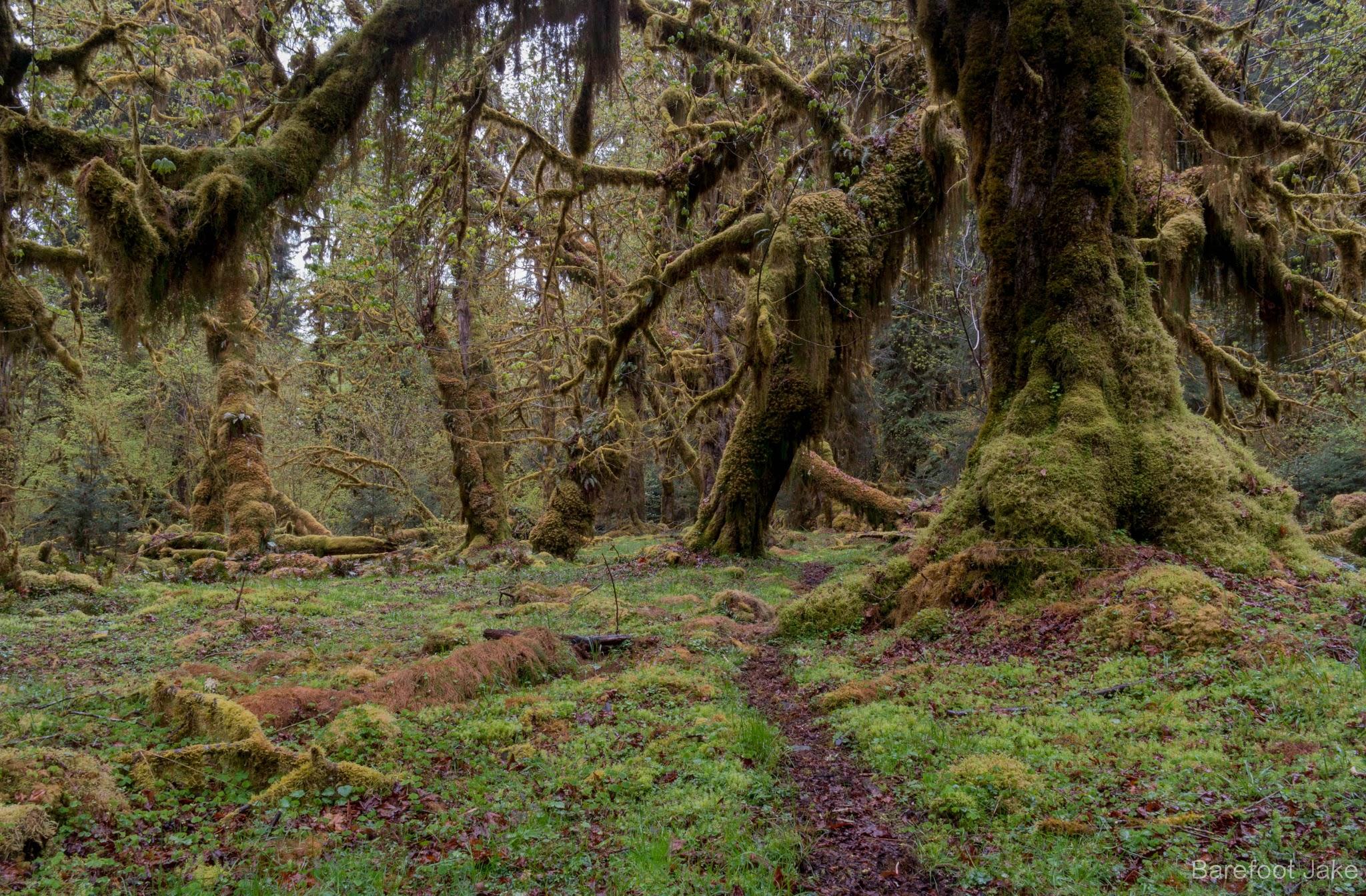 elk trail